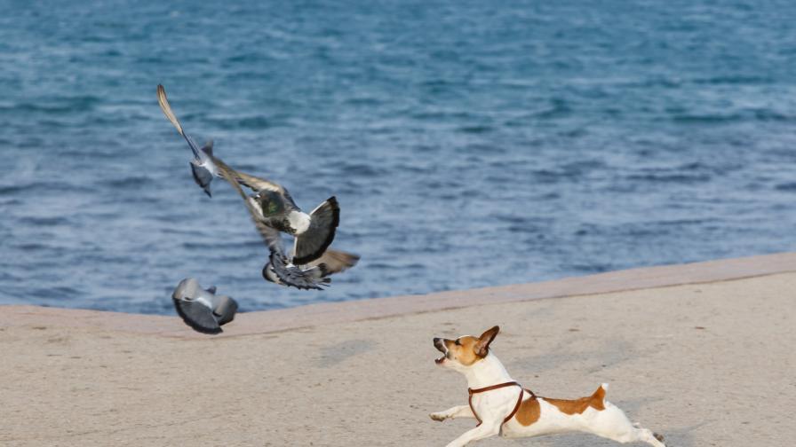 <p><strong>Куче</strong>, което не може да ходи и <strong>гълъб</strong>, който не може да лети &ndash; най-добри приятели</p>