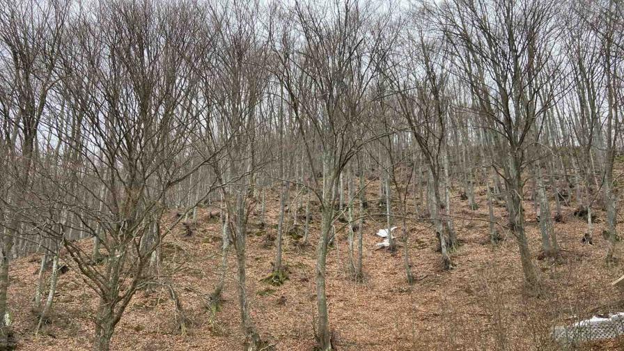 Намериха телата на бащата и сина, изгубени под връх Ботев