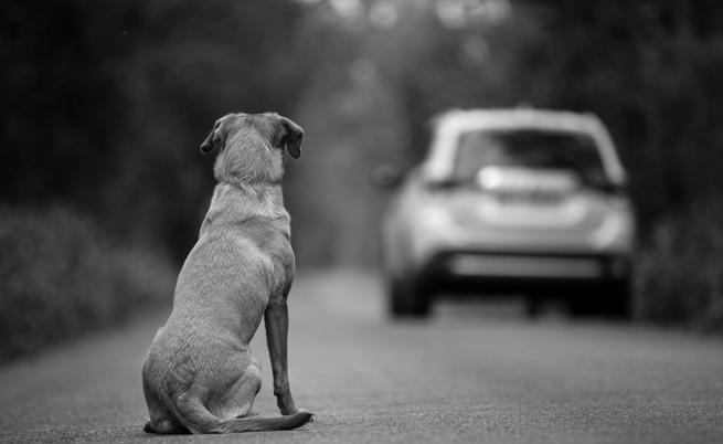 Най-самотното куче във Великобритания си търси дом