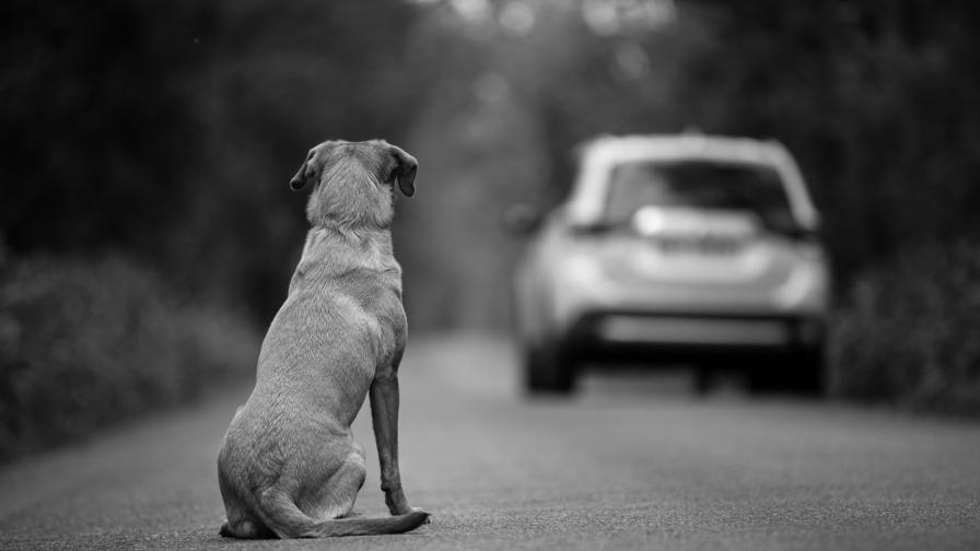 <p><strong>Най-самотното куче</strong> във Великобритания си търси дом</p>