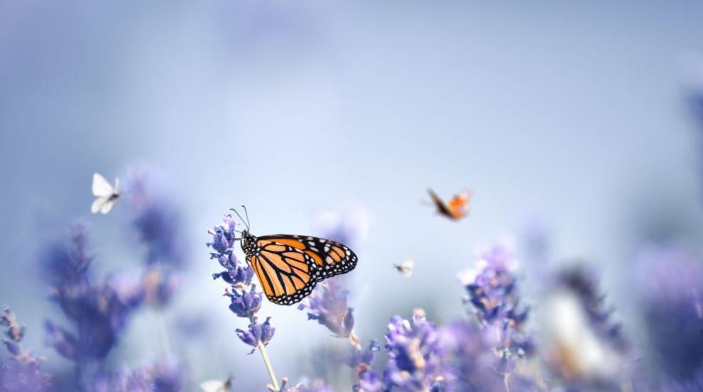 Пеперуди се отдават на разврат и пиянство по време на...