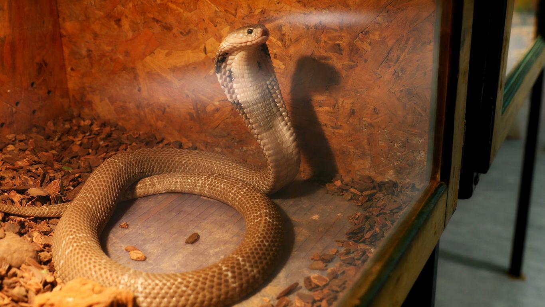 <p>Буболечки, змии и гущери живеят в Музейко, а поводът за това е новата изложба &ldquo;Пълзящи експонати&rdquo;.</p>  <p>&nbsp;</p>