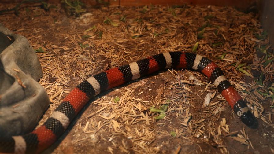 Сензационно: Змии и хлебарки в Музейко