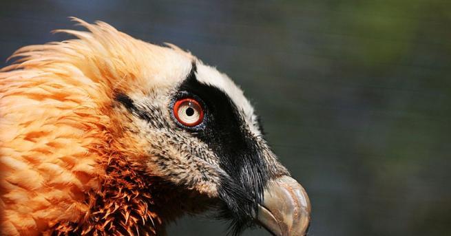 В Спасителния център за диви животни в Стара Загора се