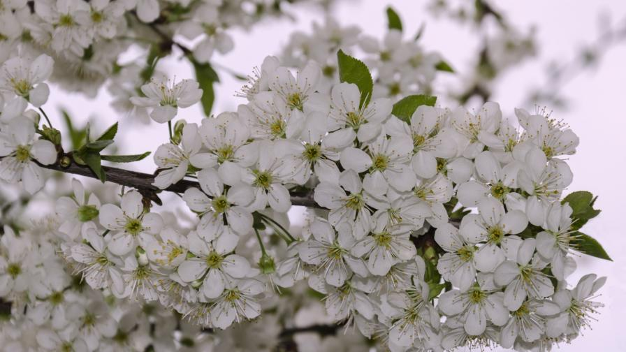 <p>Честита<strong> първа пролет!</strong></p>