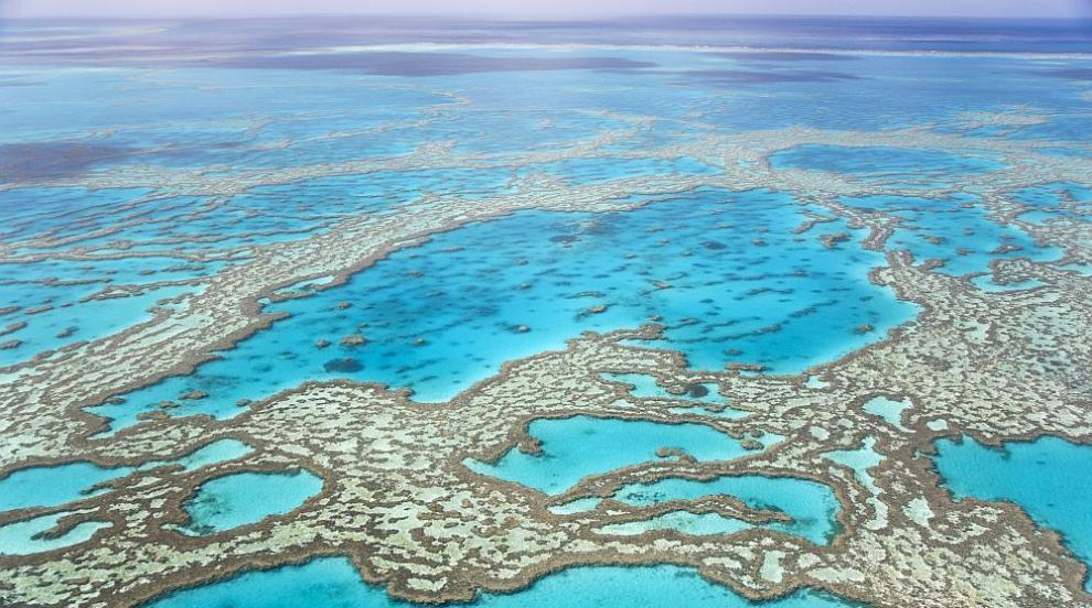 Големият бариерен риф избеля за трети път само за пет...
