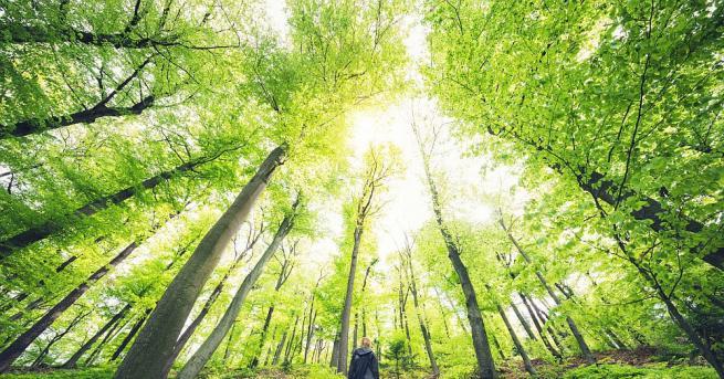 От днес започва Седмицата на гората - професионалният празник на