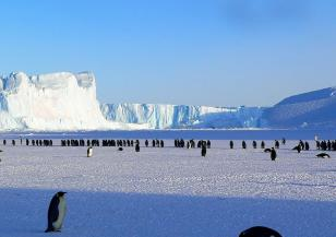 Някога на Антарктида е имало гори