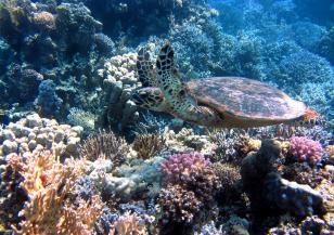 Защо загиват кораловите рифове