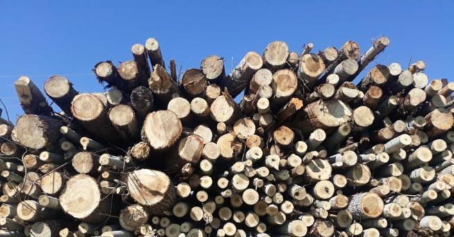 Служители на Изпълнителна агенция по горите и Регионална дирекция по