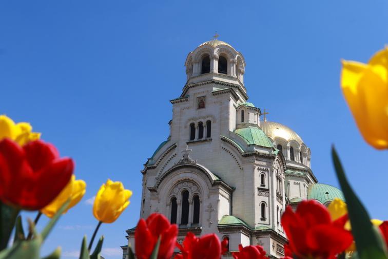 пъстрота цветя цвят софия пролет цветенца шарено
