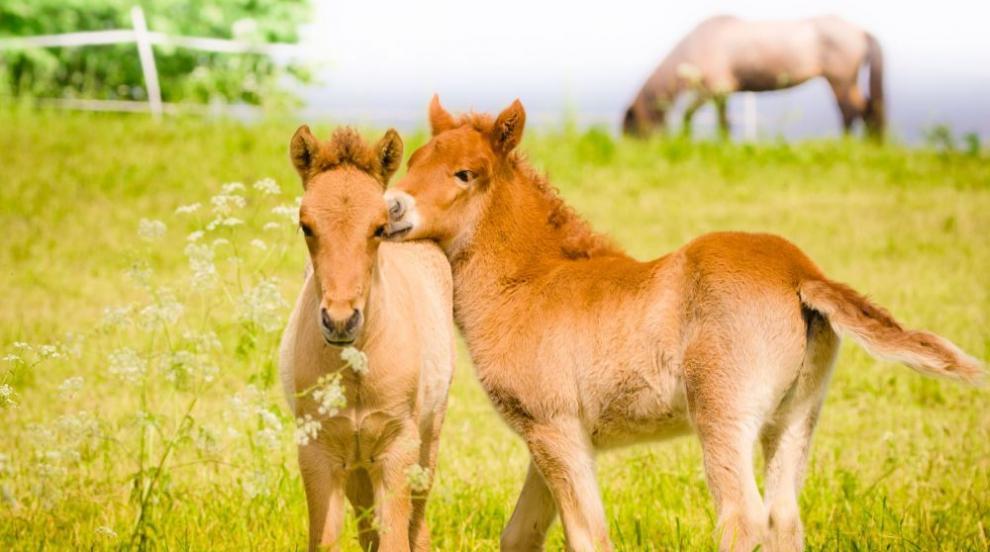 Бебе пони, родено в зоопарка в Ухан, носи името