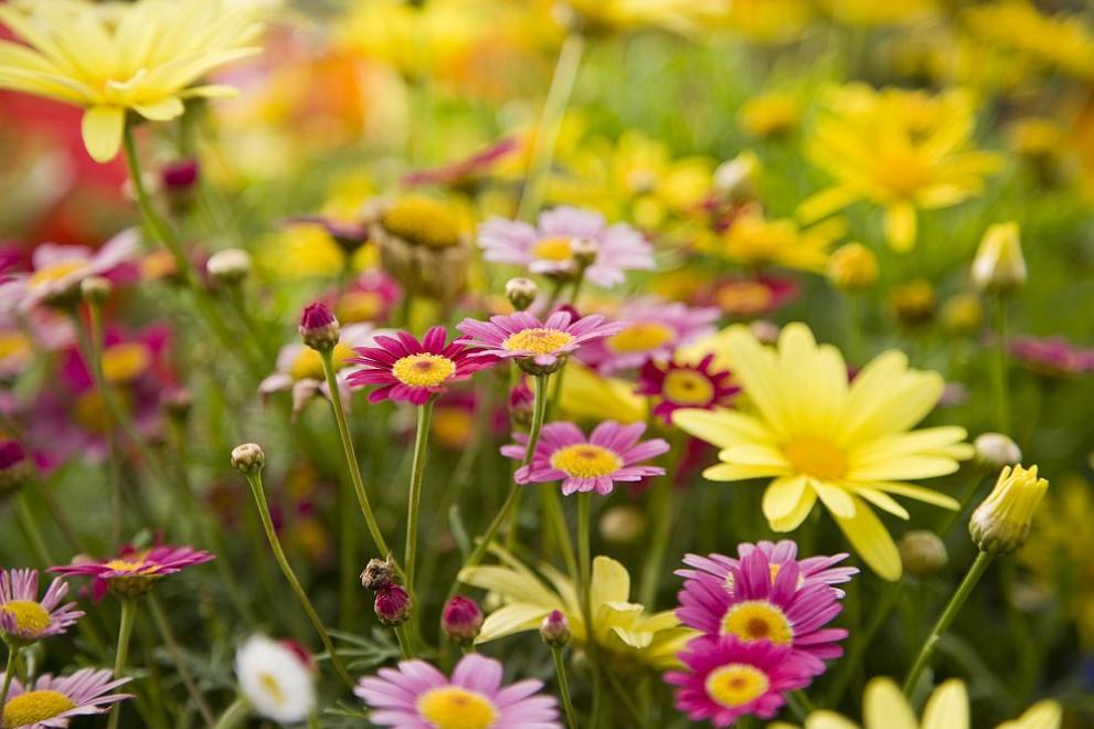 цветя лято прогноза да времето