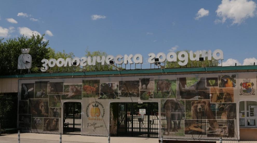 Зоопаркът в София отваря, има и нови обитатели