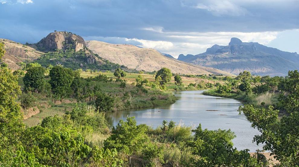 Изследват билка от Мадагаскар срещу коронавирус