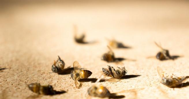 В Плевен организират мълчаливо бдение срещумасовото отравяне на пчели.Пчеларите отново