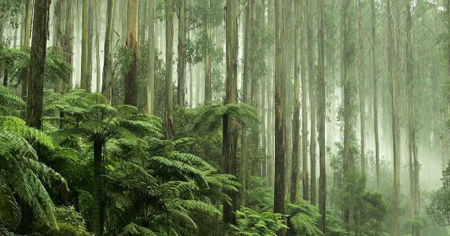 Тропическите гори могат да загубят функцията си на гигантски склад