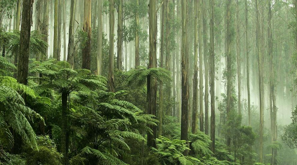 Тропическите гори могат да станат източник на...