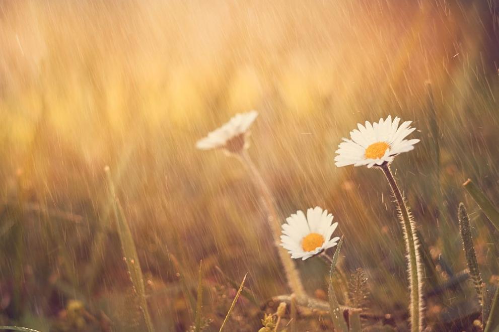 дъжд цветя прогноза за времето