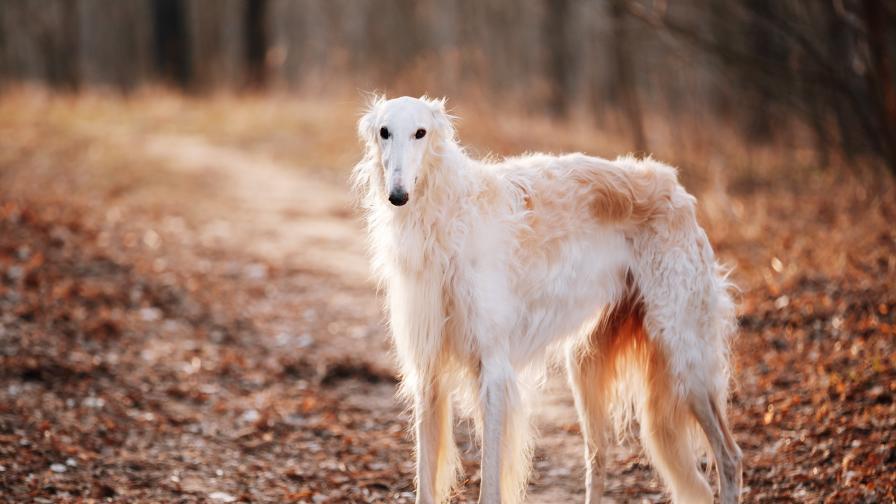 Това куче стана интернет звезда заради носа си