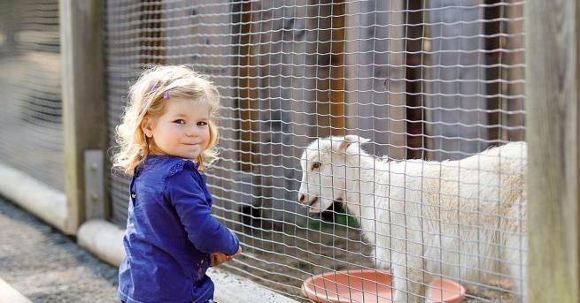 Центърът за защита на природата и животните в Добрич ще