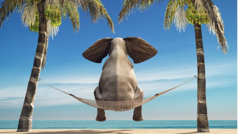 слон лято плаж