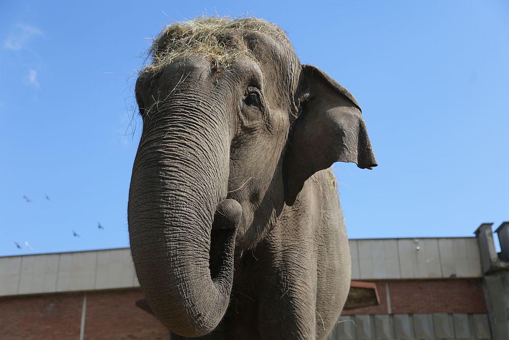Слоницата Артайда