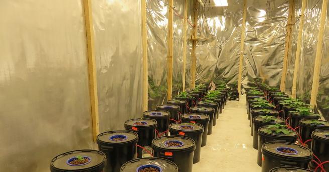 Професионално оборудвана оранжерия за отглеждане на канабис е разкрита в