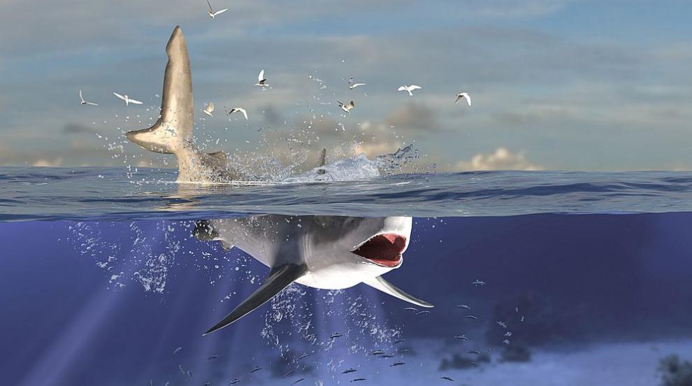 Акула задигна плавника на гмуркач в Австралия