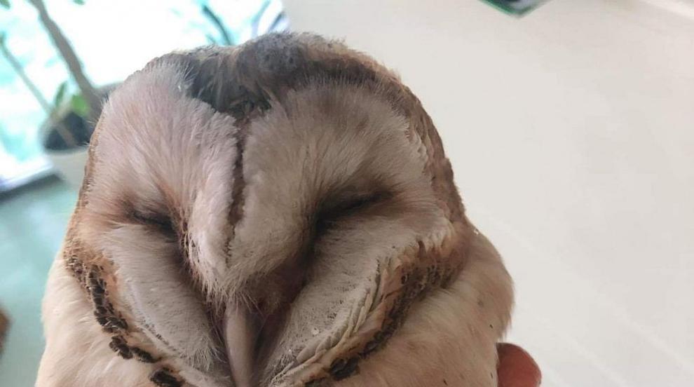 Спасиха защитен вид сова в беда (СНИМКИ)