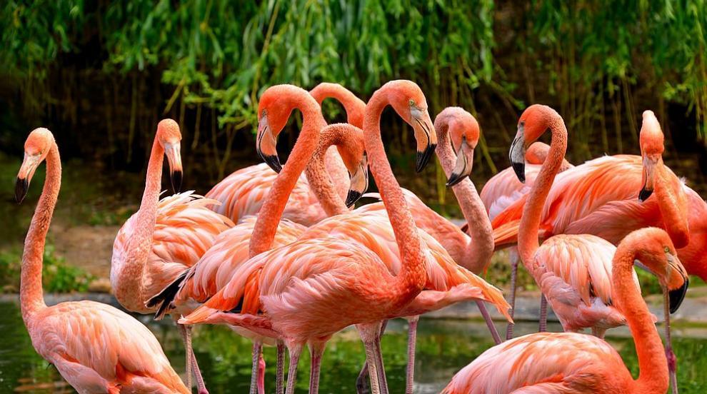 Розово фламинго издаде крадец на полицаите