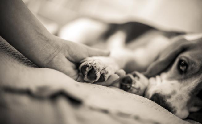 Брутално насилие над куче: Дете го впрегна да дърпа каруца и го преби с лопата