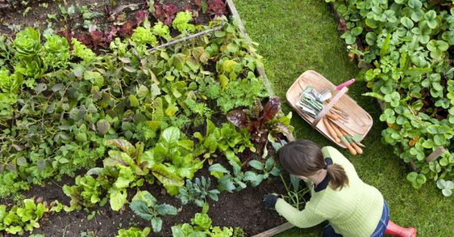 Ароматна цветна градина, коприненомека трева, зреещи плодове и зеленчуци –
