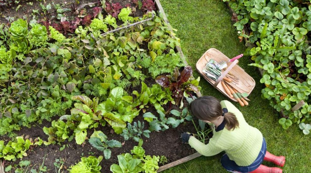 Как да изгоним вредителите от градината?