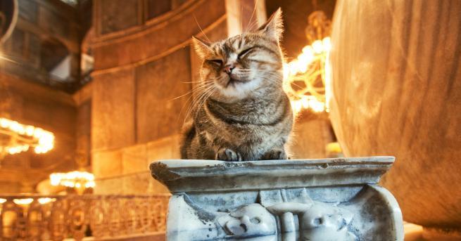 Свят Истанбул и котките - свързани още от Византийската империя