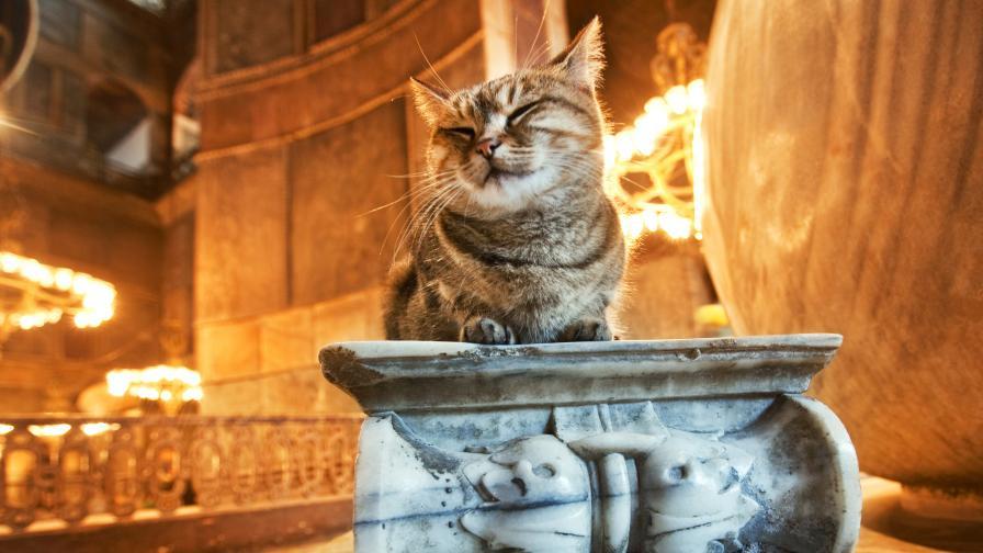 Истанбул и котките - свързани още от Византийската империя