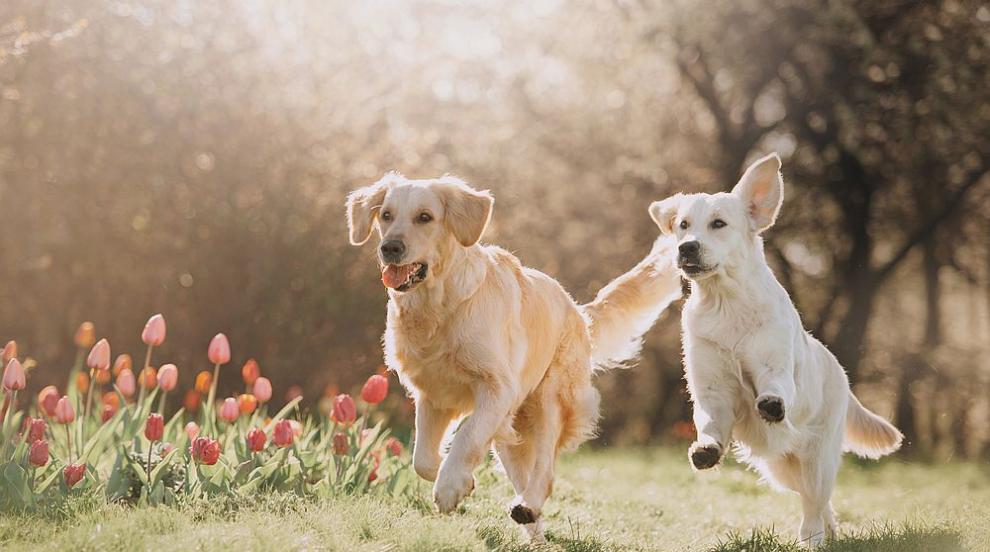 Какво още не знаем за кучетата