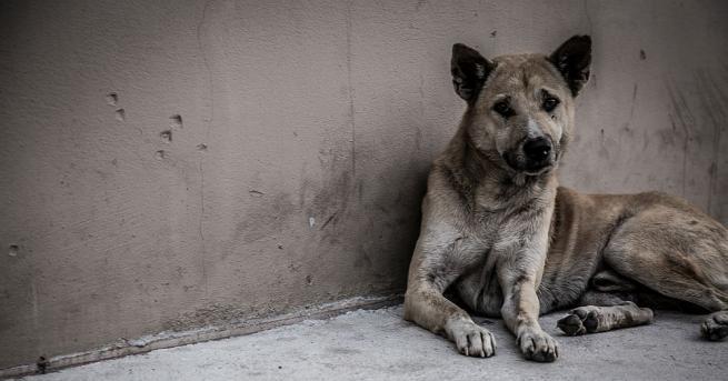 Клип с отвратително отношение към куче предизвика възмущение в социалните