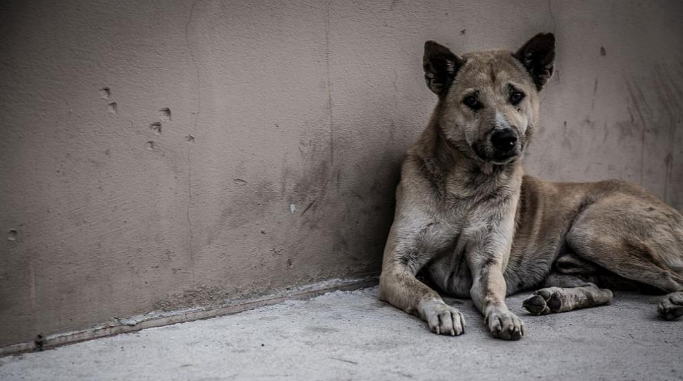 637 кучета от общинските приюти са осиновени от началото на годината