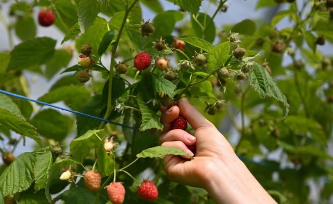 ВАП възложи на земеделския министър проверка дали се внасят и използват неразрешени препарати за растителна защита