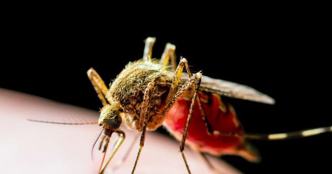 Коронавирусът не е в състояние да се предава от комари.