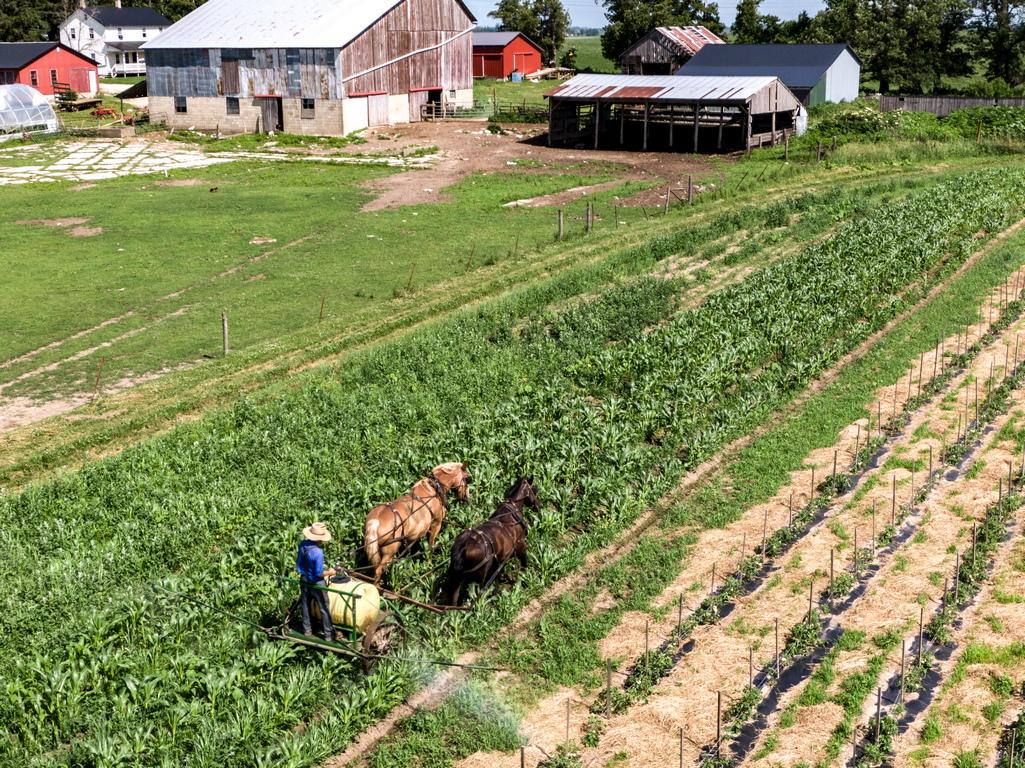 <p>Наброяват около 330 000 души (към 2017 г.) в 21 щата. Пенсилвания има най-голяма концентрация на амиши (76 620), следван от Охайо (75 830) и Индиана (54 825).</p>  <p>&nbsp;</p>