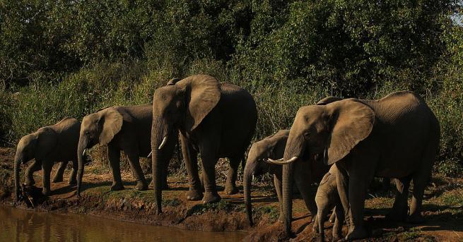 Свят Мистерия: Стотици слонове са открити мъртви в Ботсвана От