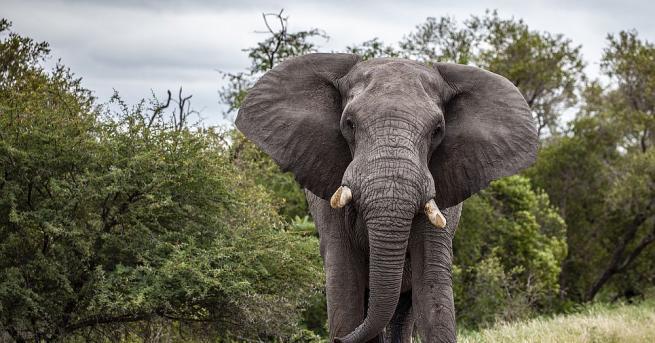 """Ботсвана разследва """"напълно безпрецедентната"""" смърт на стотици слонове от месец"""