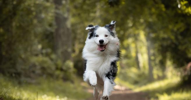 Куче помогна за спасяването на живота на съседи при възникването