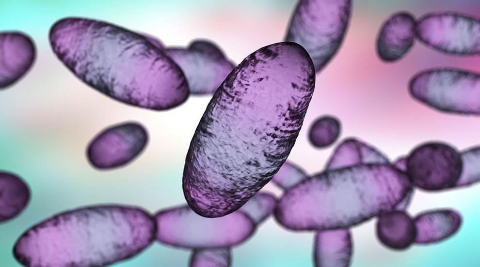 СЗО не вижда висок риск в случая на бубонна чума в...