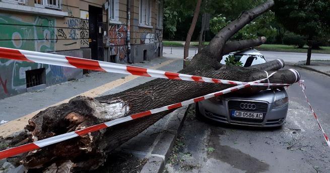 Дърво падна и премаза лек автомобил в столицата, предаде репортер