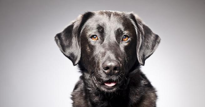 Куче събуди стопаните си по време на пожар в американския