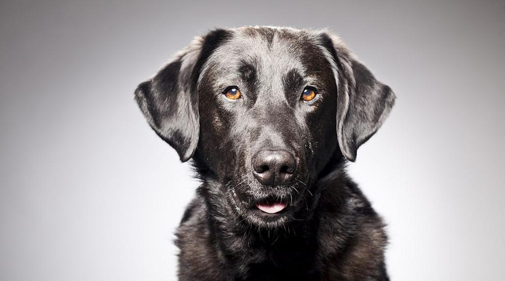 Назначиха бездомно куче на работа в магазин