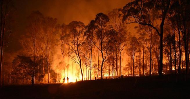3000 декара смесена гора и бензиностанция са спасени при пожар